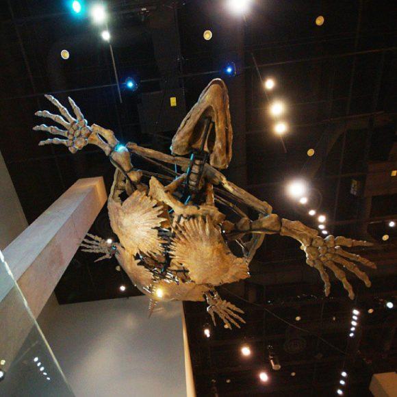 Giant Skele-turtle