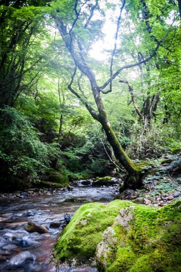 Forest Stream
