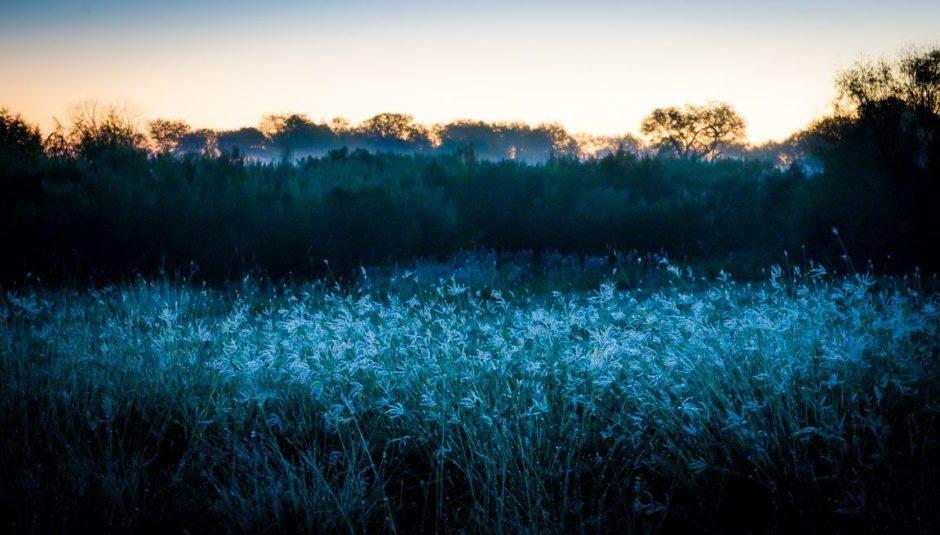 Morning, Choke Canyon State Park, 2014