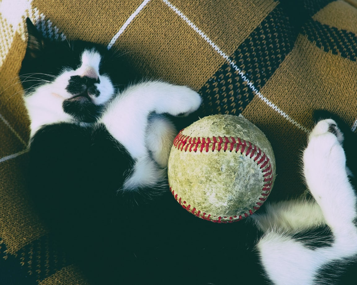 """Baseball Kitty"" Cedar Park, 2016"
