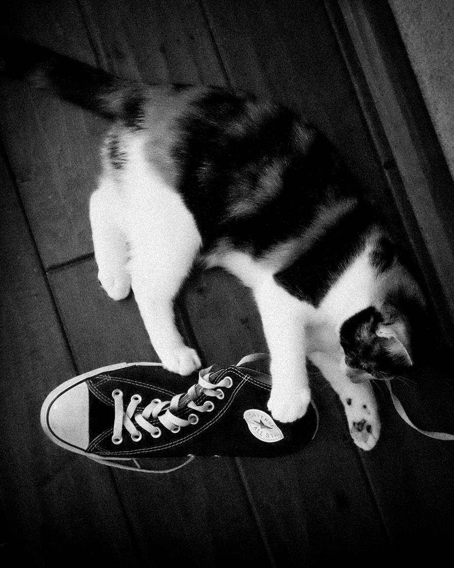 """Cat vs. Converse"" Cedar Park, 2016"