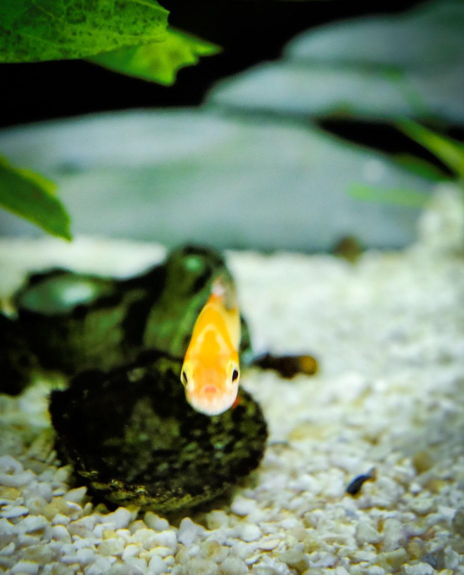 """""""Cute Fish"""" Cedar Park, 2016"""