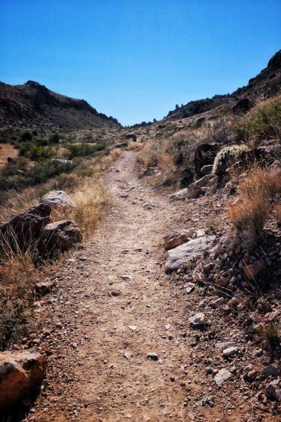 """Grapevine Trail"" Big Bend, 2016"