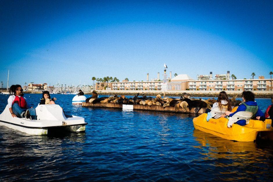 """Sea Lions"" Redondo Beach, 2016"
