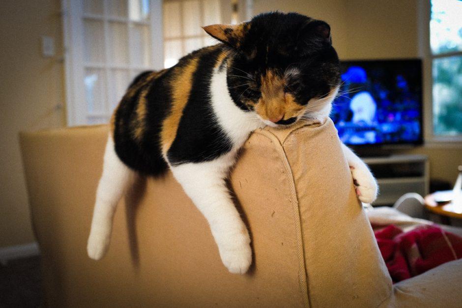 """""""Relax Cat"""" Cedar Park, 2017"""