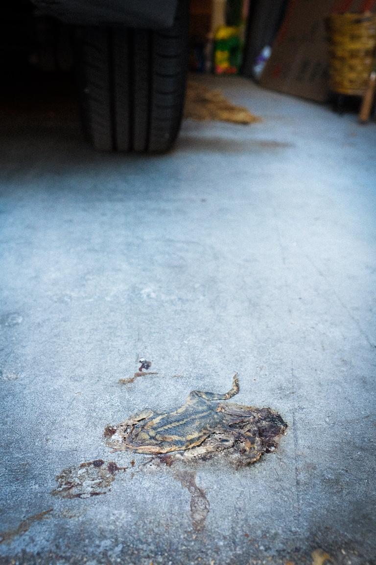 """""""RIP Frog"""" Cedar Park, 2017"""