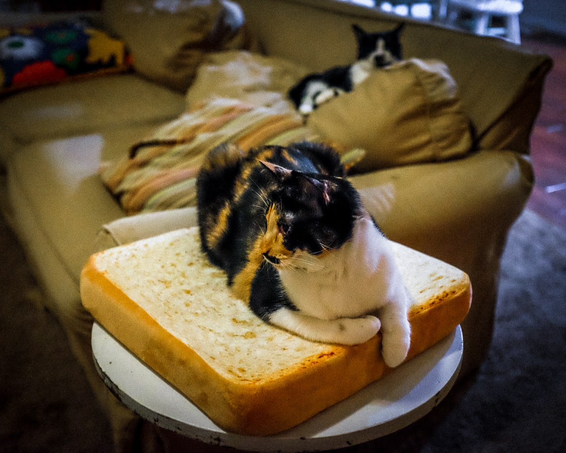 """Cat on Toast' Cedar Park, 2017"