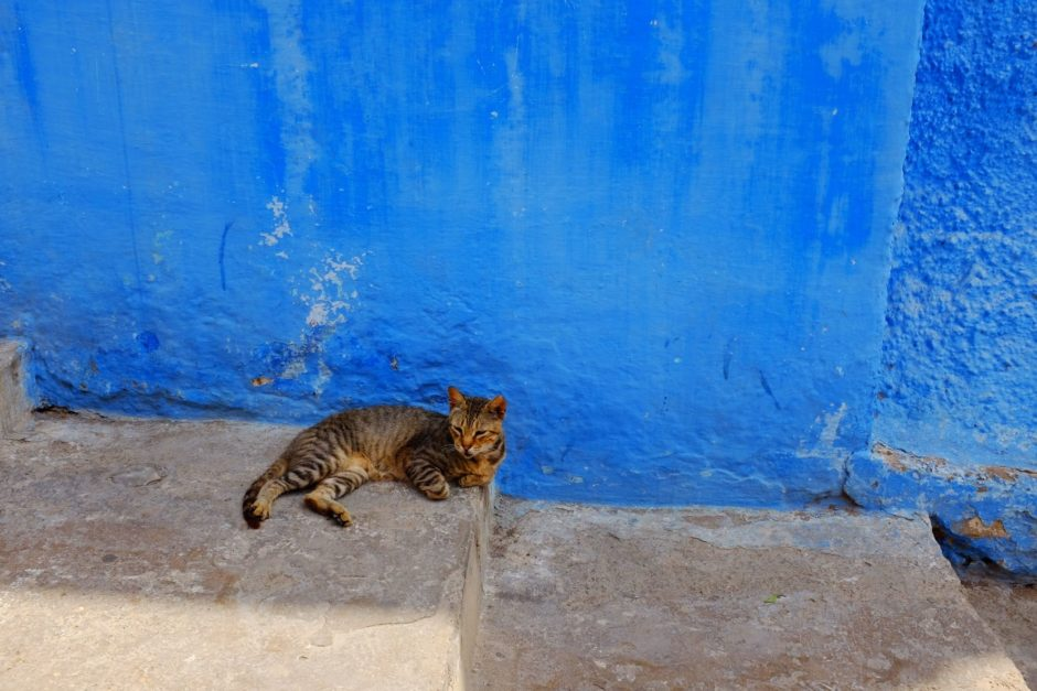 """Relaxing Cat"" Rabat, 2017"