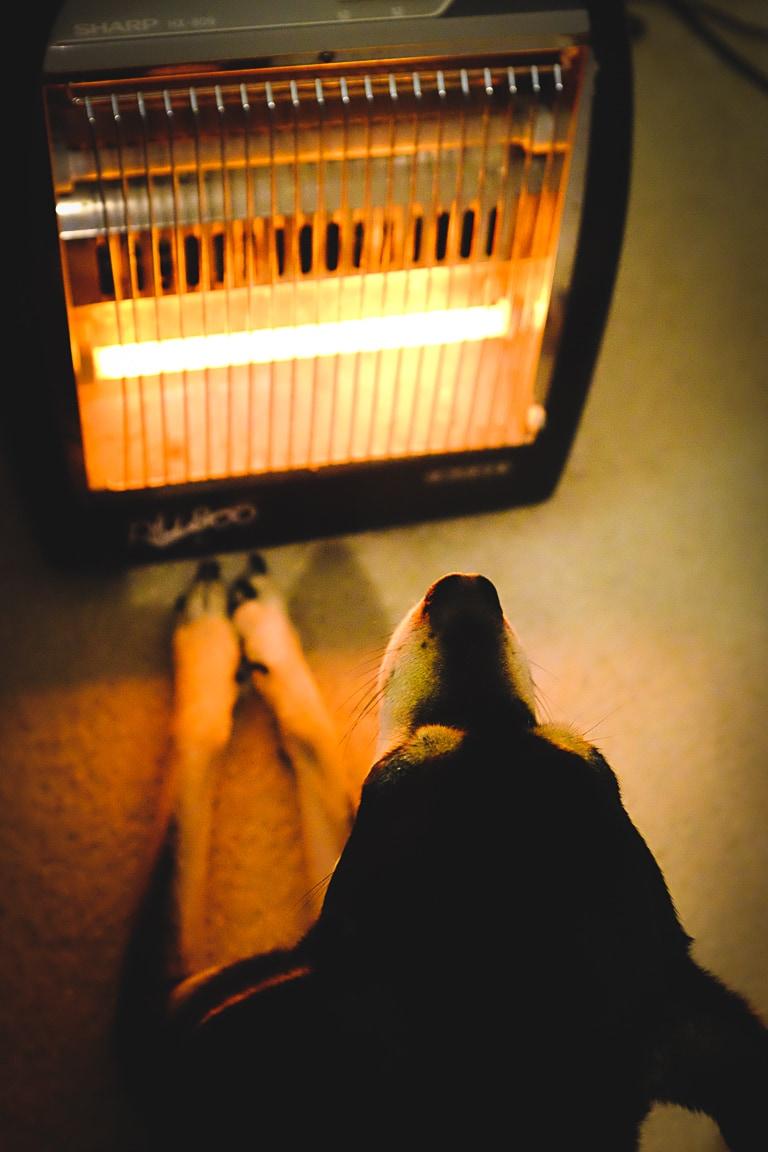 """Stay Warm"" Cedar Park, 2018"