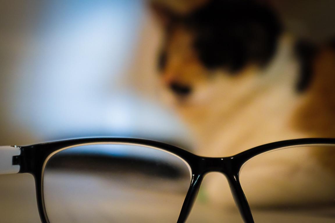 """Glasses"" Cedar Park, 2018"