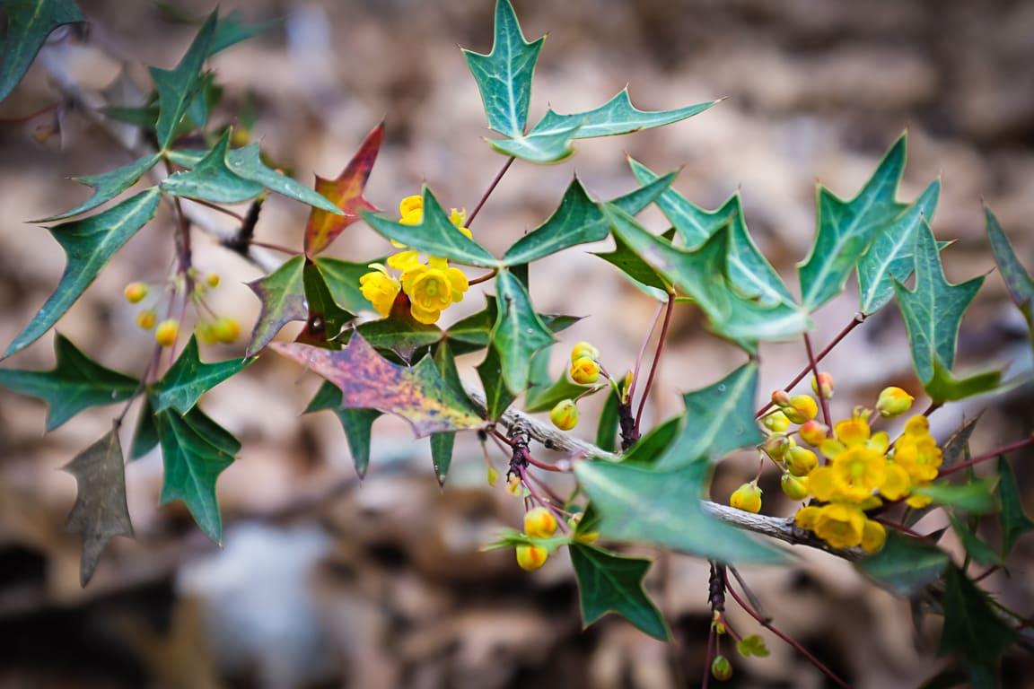 """Tiny Flowers"" Leander, 2018"