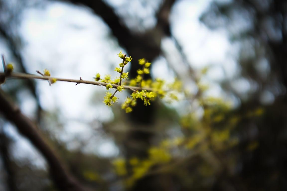 """Spring Growth"" Leander, 2018"