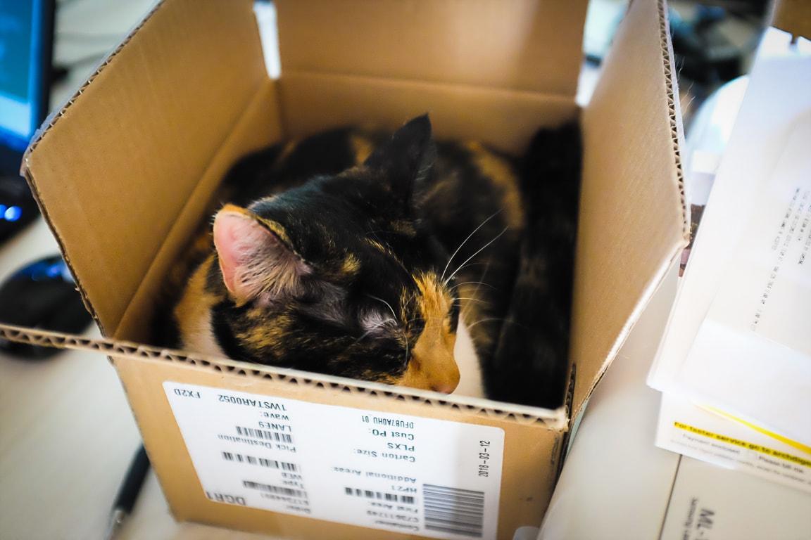 """""""Boxed Cat"""" Cedar Park, 2018"""