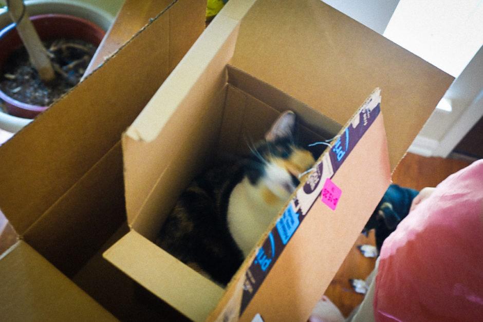 """""""Cat in a Box"""" Cedar Park, 2018"""