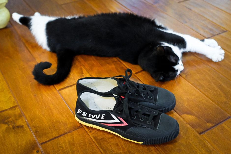 """""""Shoes and Kitty"""" Cedar Park, 2018"""