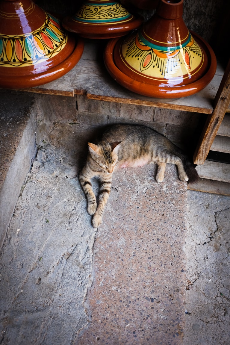 """Tagine and Cat"" Fes, 2017"