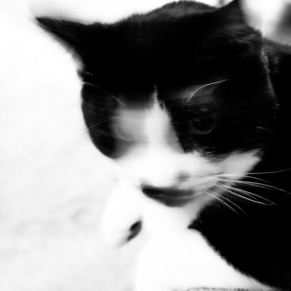 """Tuxedo Cat"" Cedar Park, 2017"